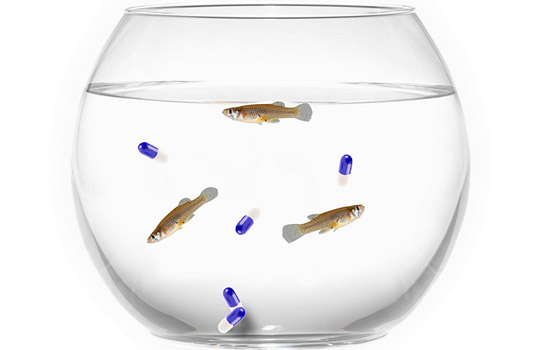 Fish and pills in fish bowl