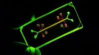 Microfluidics. Image: Dr Jeremy Barr.