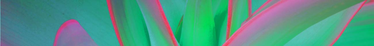Nurturing leaves clouds green pink