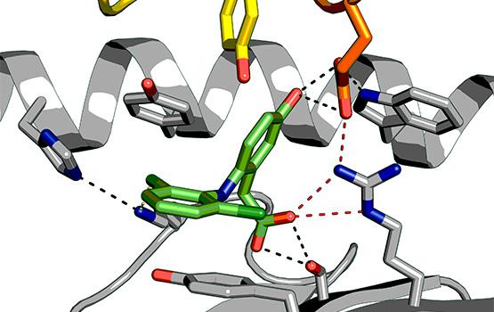 Drug immune complexes