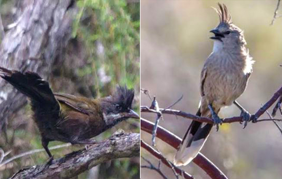 Rainfall and temperature predicts bird colouration