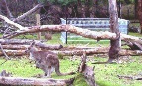 Kangaroo exclusion plot