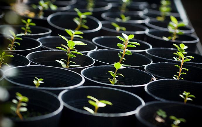 plant sciences complex