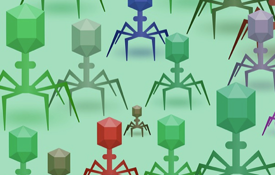 Phages are viruses, but they cannot harm humans - they only kill bacteria